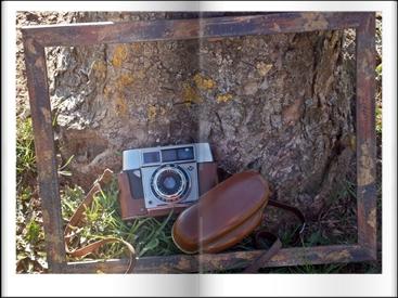 (c) copright by Beate Hefler alle Rechte vorbehalten Fotografien